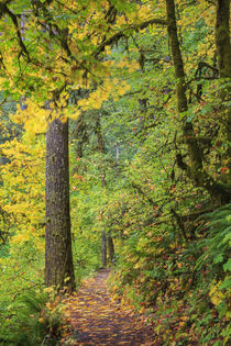 USA, Oregon, Silver Falls State Park, Trail by Danita Delimont