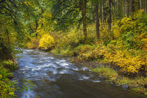 USA, Oregon, Silver Falls State Park, North Fork Silver Creek by Danita Delimont