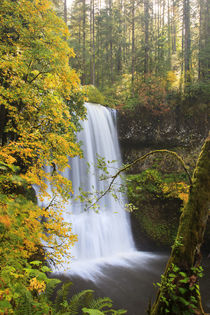 USA, Oregon, Silver Falls State Park, Lower South Falls, 93 feet von Danita Delimont