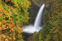 USA, Oregon, Columbia River Gorge, Metlako Falls, 101 feet by Danita Delimont