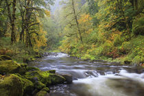 USA, Oregon, Columbia River Gorge, Tanner Creek von Danita Delimont