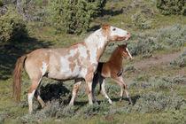 Wild Horses, Mare with colt von Danita Delimont