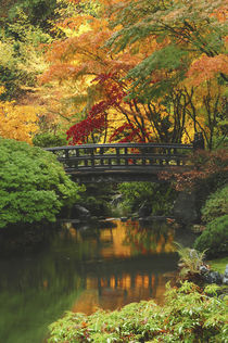 Moon Bridge in Autumn: Portland Japanese Garden, Portland, Oregon, USA by Danita Delimont