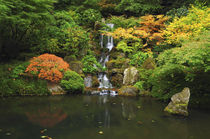 Waterfall in Autumn at the Portland Japanese Garden, Portlan... von Danita Delimont