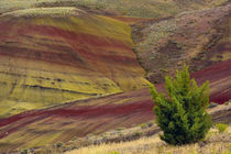 Painted Hills, Mitchell, Oregon, USA by Danita Delimont