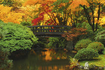 Autumn at Portland Japanese Garden, Portland, Oregon, USA. by Danita Delimont