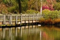 Wooden Bridge, reflected, Crystal Springs Lake, Crystal Spri... by Danita Delimont