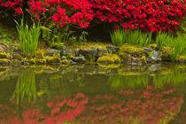 Portland Japanese Garden in spring, Portland, Oregon, USA. von Danita Delimont