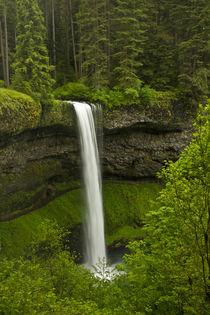 South Falls, Silver Falls State Park, Oregon, USA by Danita Delimont