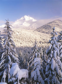USA, Oregon, Mt Hood National Forest, View frost trees on Mt von Danita Delimont