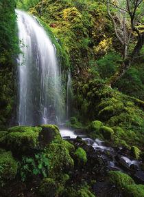USA, Oregon, Columbia Gorge Scenic Area, Mt Hood National Fo... by Danita Delimont