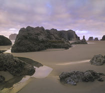 Bandon Beach, Oregon by Danita Delimont