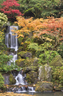 Heavenly Falls and autumn colors, Portland Japanese Garden, Oregon von Danita Delimont