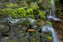 USA, Pennsylvania, Benton, Ricketts Glen State Park by Danita Delimont