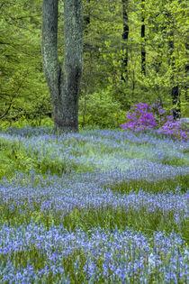 USA, Pennsylvania, Wayne, Chanticleer Garden von Danita Delimont