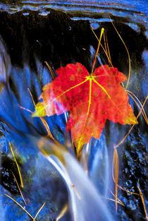 USA, Pennsylvania, Delaware Watergap National Recreational Area by Danita Delimont