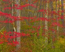 USA, Pennsylvania, Delaware Watergap National Recreational Area von Danita Delimont