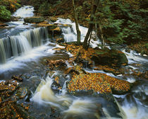 USA, Pennsylvania, Ricketts Glen State Park, Allegheny Mount... by Danita Delimont
