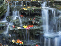 Small waterfall on Kitchen Creek, Ricketts Glen State Park, ... by Danita Delimont