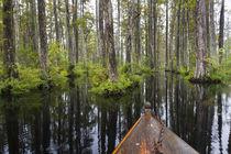 USA, South Carolina, Cypress Gardens von Danita Delimont