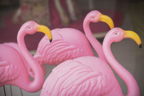 Plastic pink flamingos, Charleston, South Carolina by Danita Delimont
