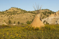USA, South Dakota, Wild Horse Sanctuary by Danita Delimont