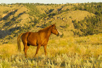 USA, South Dakota, Wild Horse Sanctuary by Danita Delimont