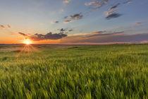 Sunset over prairie grasslands in Badlands National Park, So... by Danita Delimont
