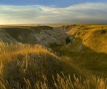 Sunrise over the prairie, Badlands National Park, South Dakota by Danita Delimont