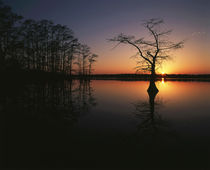 USA, Tennessee, Reelfoot National Wildlife Refuge, Silhouett... by Danita Delimont