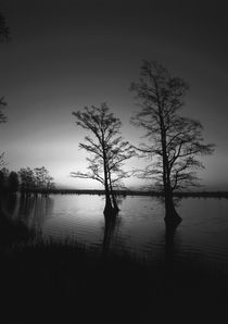 USA, Tennessee, Reelfoot National Wildlife Refuge, Trees ref... by Danita Delimont