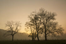 Trees silhouetted at sunrise, Cades Cove, Great Smoky Mounta... von Danita Delimont