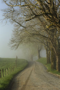 Early morning view of Sparks Lane, Cades Cove, Great Smoky M... by Danita Delimont