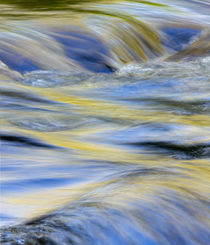 Flowing water and spring colors reflected on stream, Great S... von Danita Delimont