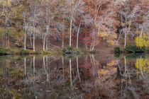 USA, Tennessee, Cumberland Mountain State Park by Danita Delimont