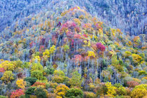 Tennessee, Great Smoky Mountains National Park, view along N... von Danita Delimont
