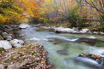Tennessee, Great Smoky Mountains National Park, Little River von Danita Delimont