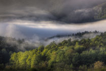 USA, Tennessee, Foggy morning at Cades Cove in the Smokies. von Danita Delimont