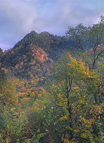 Chimney Tops, Great Smokey Mountains National Park, Tennessee, USA by Danita Delimont