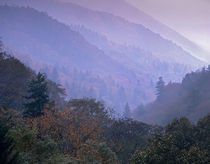 Great Smoky Mountains National Park near Newfound Gap, Tennessee, USA by Danita Delimont