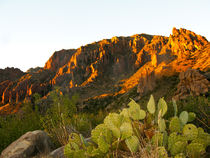 USA, Texas, Big Bend National Park, Chisos Mountains, Evenin... by Danita Delimont