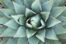 USA, Texas, Guadalupe Mountains National Park von Danita Delimont
