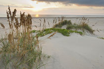 Sea Oats on Gulf of Mexico at South Padre Island, Texas, USA. von Danita Delimont