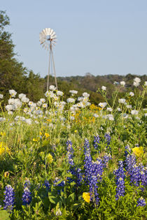 Wildflowers and windmill in Texas hill country. von Danita Delimont