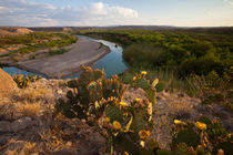 Prickly Pear Cactus above the Rio Grande in Big Bend National Park. by Danita Delimont