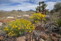 Mule Ears formation and wildflowers in Big Bend National Park von Danita Delimont