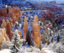 Bryce Canyon National Park; Winter. von Danita Delimont