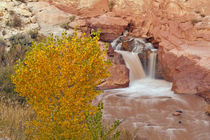 USA, Utah, Capitol Reef National Park by Danita Delimont