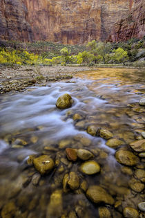 USA, Utah, Zion National Park by Danita Delimont