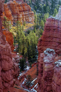 USA, Utah, Bryce Canyon National Park by Danita Delimont